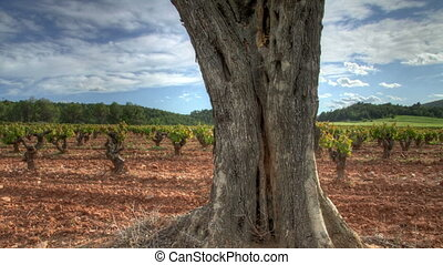 tree with vineyards