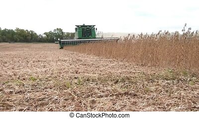 Harvesting Crop of Beans in Fall - Green tractor harvests...