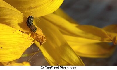 Tiny Centipede on Yellow Flower Closeup
