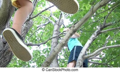 Kids Up in Tree - Shot from below, girl climbs in tree while...