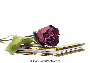 Book of poetry - a red faded rose on a book