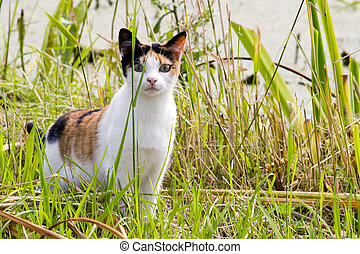 Cat - tortoiseshell cat in the grass