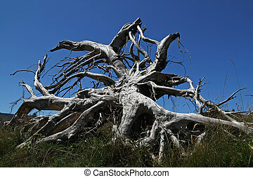 Tree Roots after Storm against blue sky