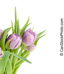 Pink tulips bouquet Isolated on white background