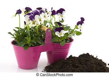 púrpura, Violines