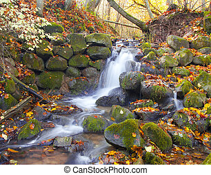 bonito, Outono, Cachoeira, floresta, cascata
