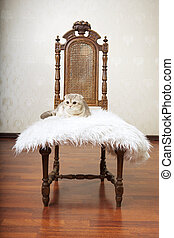Cat sitting on a beautiful vintage chair - The image of a...