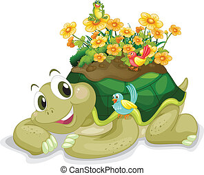 tortoise - illustration of tortoise on a white background