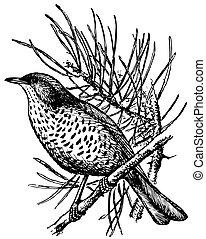 Bird Mistle Thrush on the branch