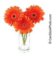 Three gerbera flowers in glass. Isolated on white