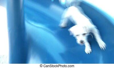 Puppy Going Down Slide