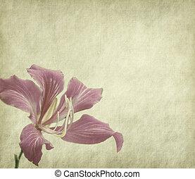 flower blossom on old antique vintage paper background