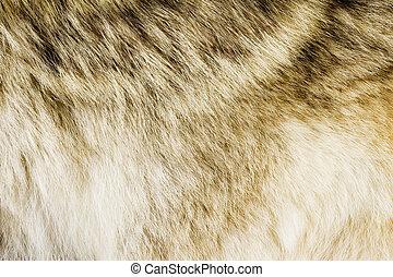 Fluffy fur texture