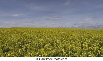 yellow flowers landscape