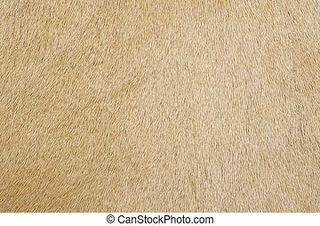 cowhide texture - Beige color cowhide texture of background...