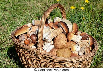 Basket with boletus edulis on grass - Basket with boletus...