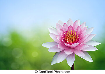 Red lotus on spring background