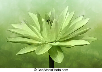 Abstract  lotus on spring background
