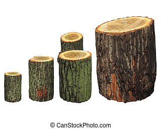 Birch wooden logs isolated on white