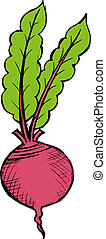 red beet - hand drawn illustration of a red beet on white