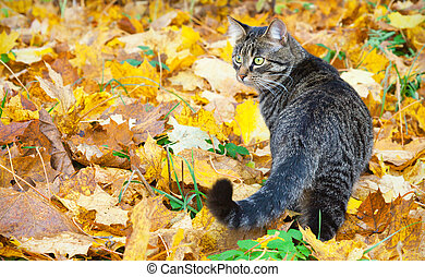 Beautiful kitty on the autumn leaves