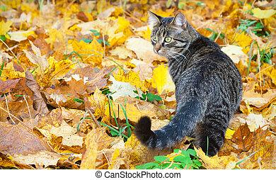 Beautiful kitty on the autumn leaves