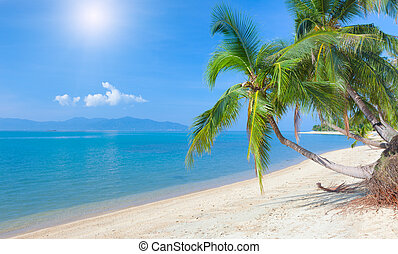 tropical beach with coconut palm. Maeman beach, koh Samui,...