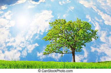 美麗, 綠色, 樹, 草地