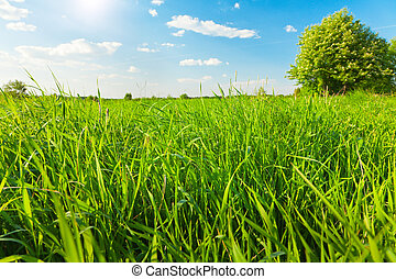 green field and blue sky with sun
