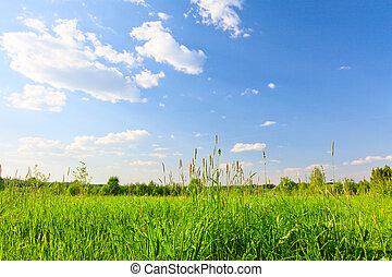 Green hill under blue sky