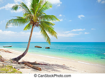 tropical beach with coconut palm. Koh Lanta, Thailand
