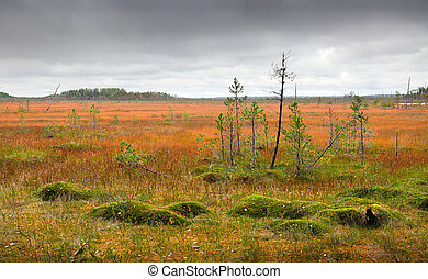 Northern marshes