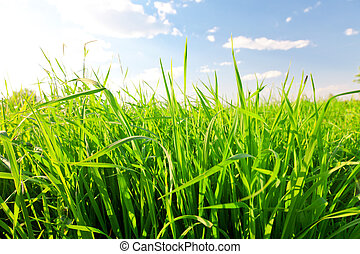 blu, cielo, erba, verde