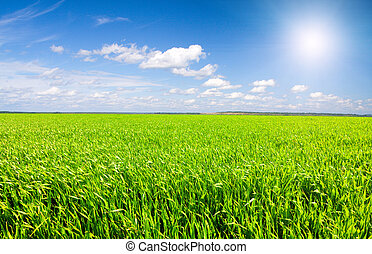 Green field under blue cloudy sky with sun