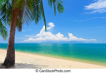 beach with coconut palm and sea, koh Samui, Thailand