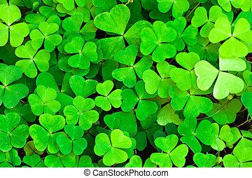 verde, trébol, Plano de fondo