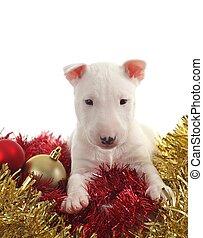 blanco, toro, terrier, perrito, chrstmas, pelotas,...