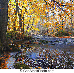 river in autumn forest