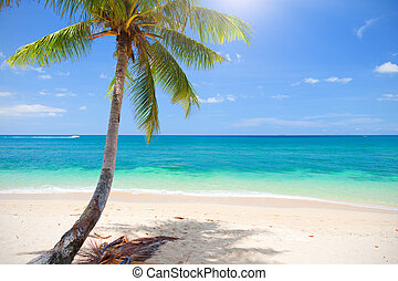 beautiful beach with coconut palm