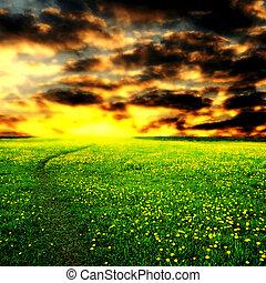 sunrise on dandelion field