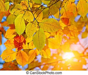 Ősz, zöld, nap