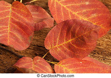 Background of european beech leaf