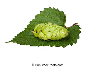 Hops cone on leaf - A single hops cone on a green leaf...