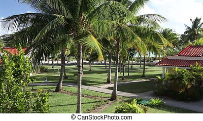 Leaves of the coconut trees waving in the wind on the...