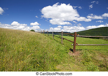 wooden fence on green summer pastoral