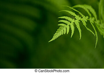 Fern leaf - Natural background with fern leaf
