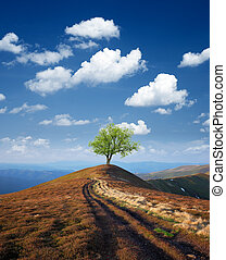 Tree on a mountain top