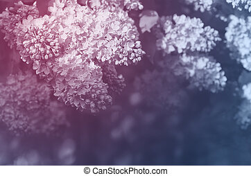 Background of blooming lilacs