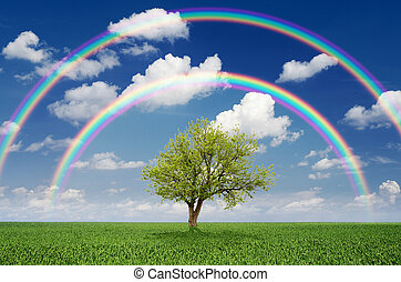 Tree in a field with a rainbow