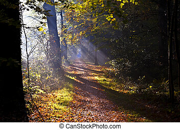 sunbeams on forest path - warm sunbeams on forest path in...